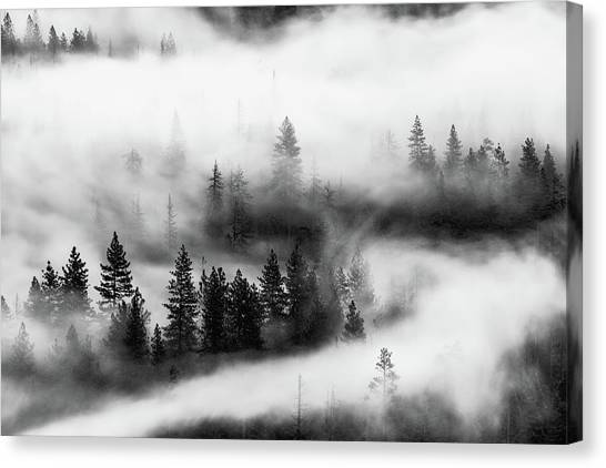 Canvas Print featuring the photograph Trees In The Mist 2 by Stephen Holst