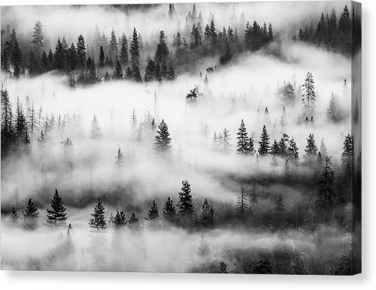 Canvas Print featuring the photograph Trees In The Mist 3 by Stephen Holst