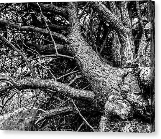 Trees, Leaning Canvas Print