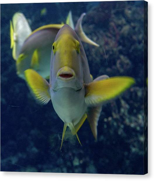 Canvas Print featuring the photograph Tropical Fish Poses. by Anjo Ten Kate