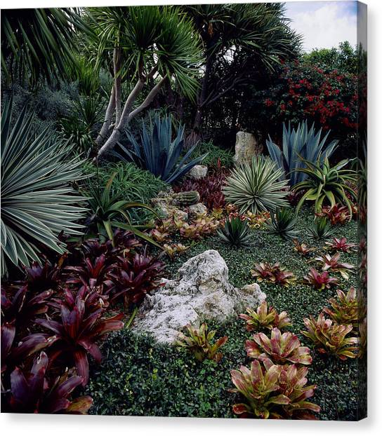 Tropical Garden, West Palm Beach, Fl Canvas Print