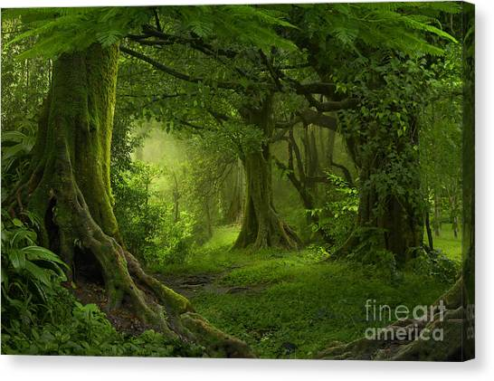 Tropical Plant Canvas Print - Tropical Jungle In Southeast Asia by Quick Shot
