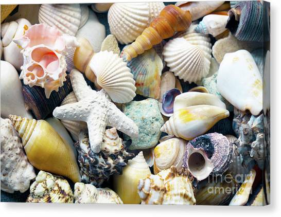 Canvas Print featuring the photograph Tropical Treasure Seashells B91218 by Mas Art Studio