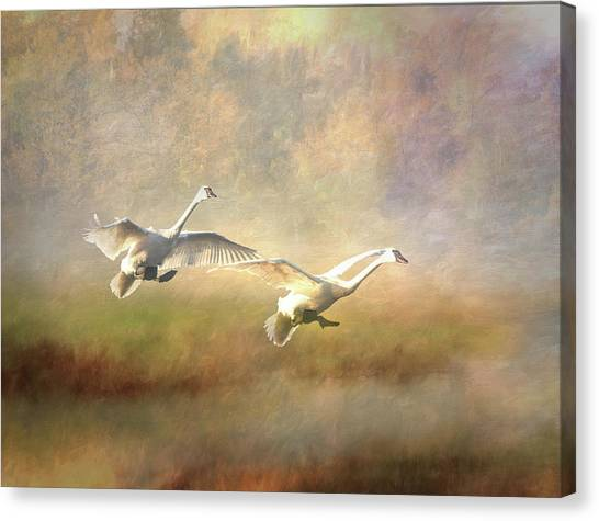 Canvas Print featuring the photograph Trumpeter Swan Landing - Painterly by Patti Deters