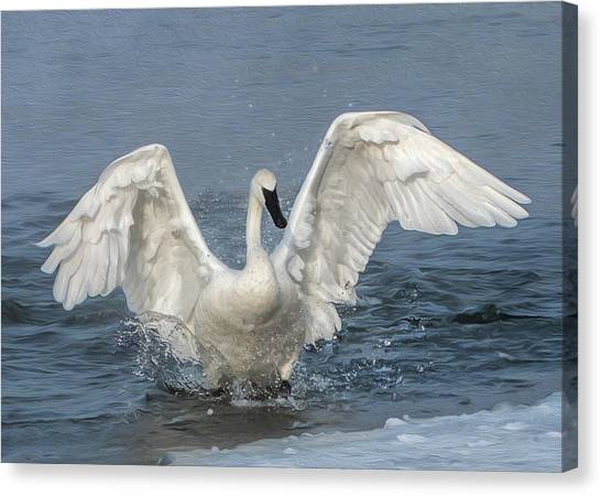 Canvas Print featuring the photograph Trumpeter Swan Splash by Patti Deters