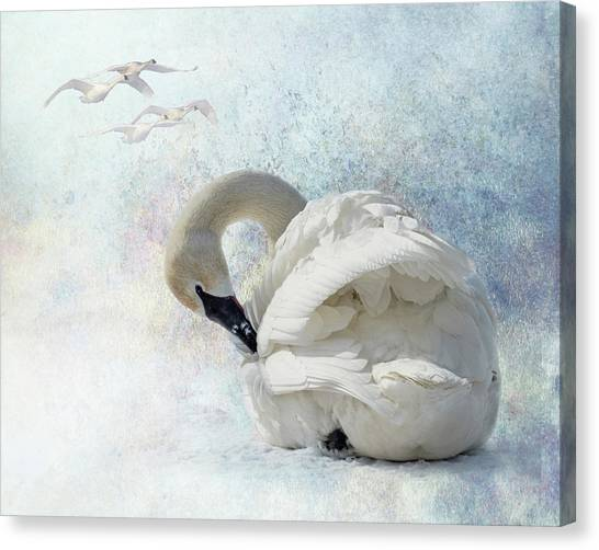 Canvas Print featuring the photograph Trumpeter Textures #2 - Swan Preening by Patti Deters