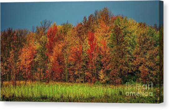 Tug Hill Colors Canvas Print