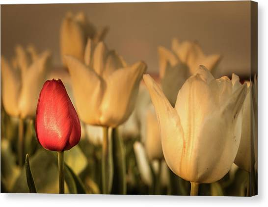 Canvas Print featuring the photograph Tulip Field by Anjo ten Kate