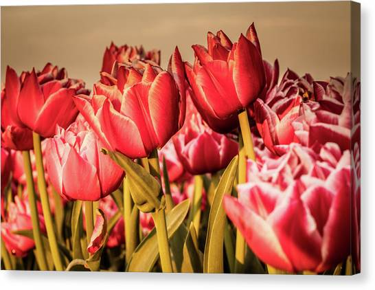 Canvas Print featuring the photograph Tulip Fields by Anjo Ten Kate