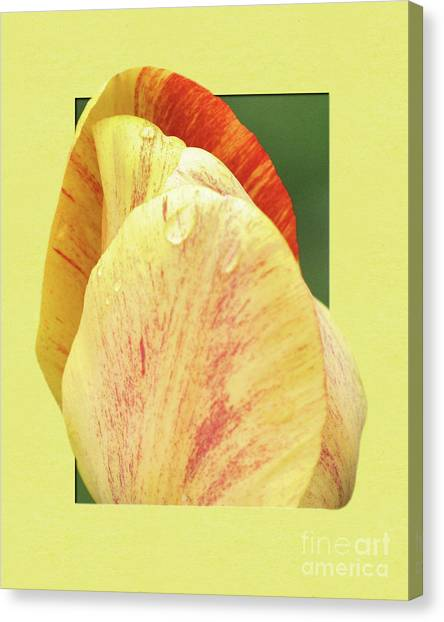 Tulip Petals Escaping Canvas Print