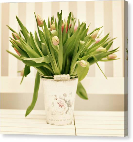 Tulips In Bucket Canvas Print