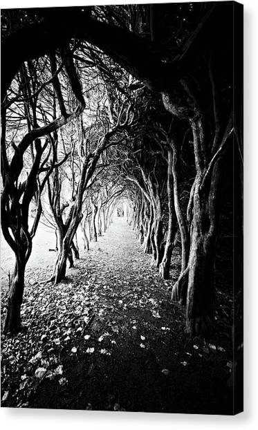 Tunnel Of Trees Canvas Print by Michelle Mcmahon