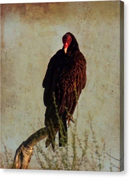 Turkey Vulture Vintage Canvas Print