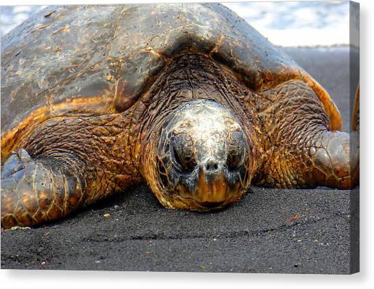 Turtle Rest Stop Canvas Print
