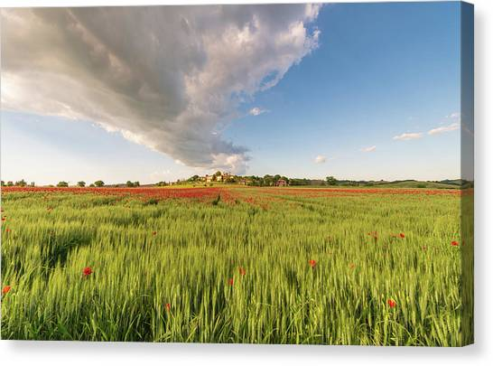 Canvas Print featuring the photograph Tuscany Wheat Field Dotted With Red Poppies by Mirko Chessari