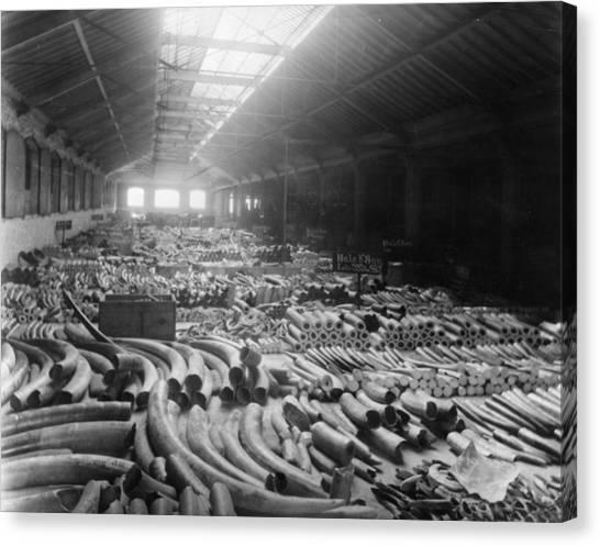 Tusk Warehouse Canvas Print by Hulton Archive