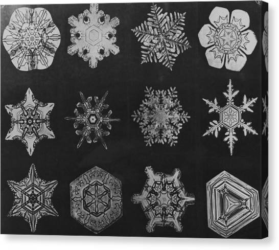 Twelve Snow Crystals Canvas Print by Herbert