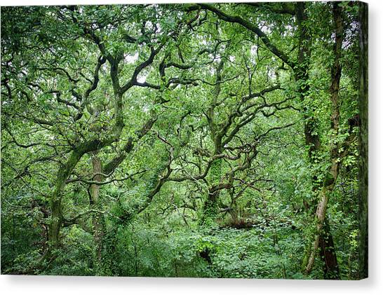 Canvas Print featuring the photograph Twisted Forest Full Color by Nathan Bush