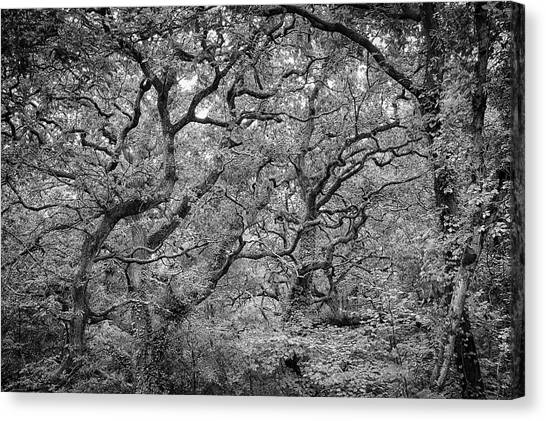 Canvas Print featuring the photograph Twisted Forest by Nathan Bush