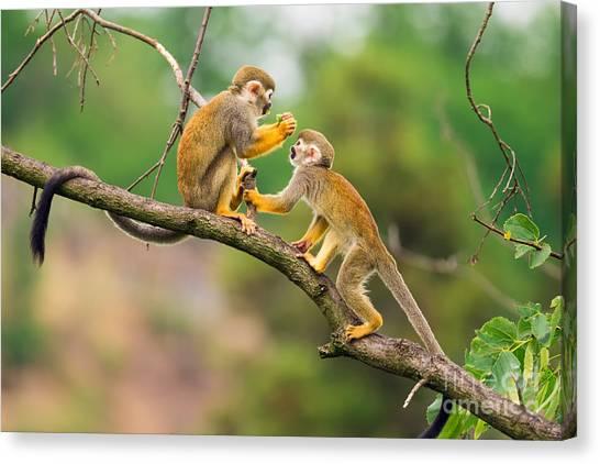 Happiness Canvas Print - Two Common Squirrel Monkeys Saimiri by Nick Fox