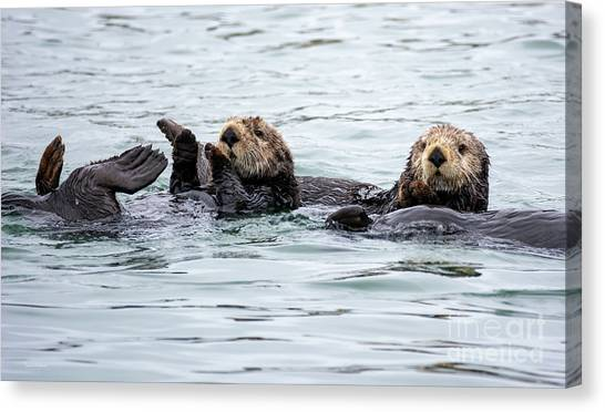 Two Cute Sea Otters Grooming Canvas Print