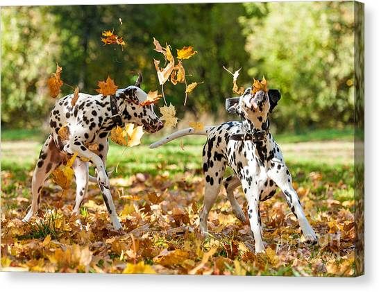 Happiness Canvas Print - Two Dalmatian Dogs Playing With Leaves by Grigorita Ko