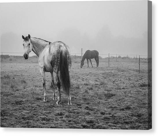 Canvas Print featuring the photograph Two Horses Bw by David Gordon