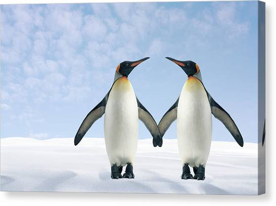 Two Penguins Holding Hands Canvas Print by Fuse