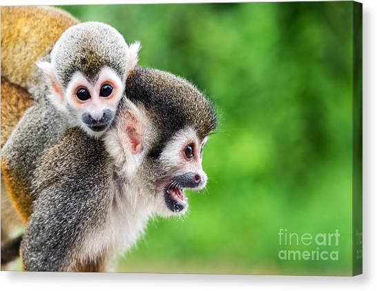 South American Canvas Print - Two Squirrel Monkeys, A Mother And Her by Jess Kraft