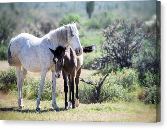 Canvas Print - Under Mama's Watchful Eye by Saija Lehtonen