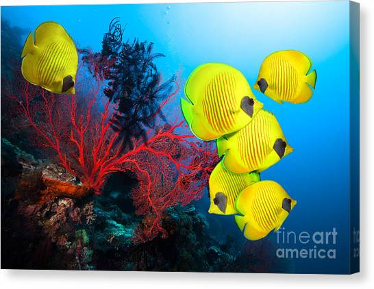Beauty Canvas Print - Underwater Image Of Coral Reef And by Frantisekhojdysz