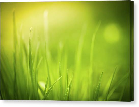 Blade Of Grass Canvas Print - Unfocused Close-up Of Green Grass by Jeja