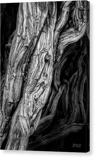 Canvas Print featuring the photograph Untitled Viii Bw by David Gordon