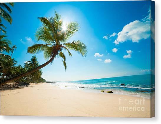 Tropical Plant Canvas Print - Untouched Tropical Beach In Sri Lanka by Anton Gvozdikov
