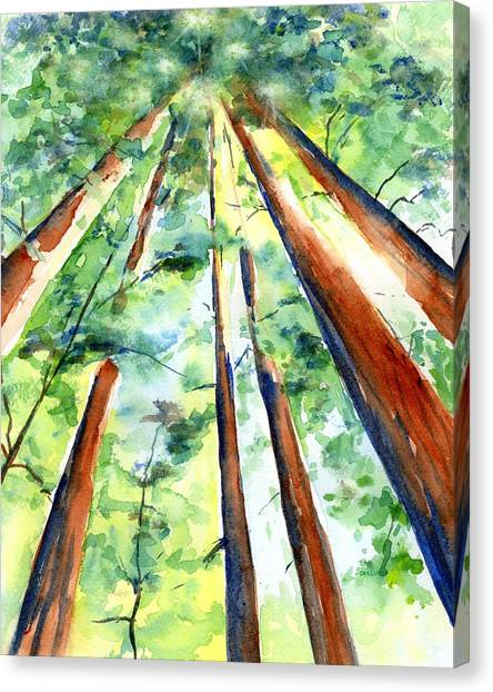 Up Through The Redwoods Canvas Print