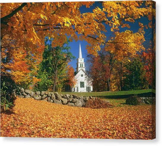 Usa, New Hampshire, Sugar Maples Acer Canvas Print