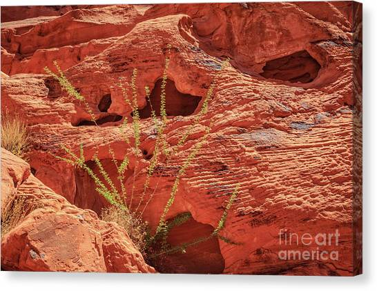 Valley Of Fire Canvas Print - Valley Of Fire Nevada by Edward Fielding
