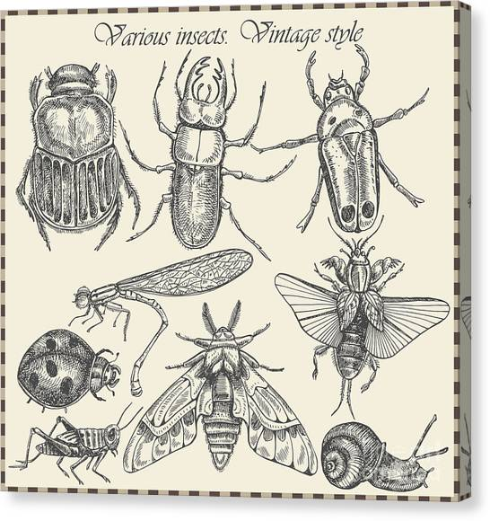 Engraving Canvas Print - Vector Set Insects In Vintage Style by Horg