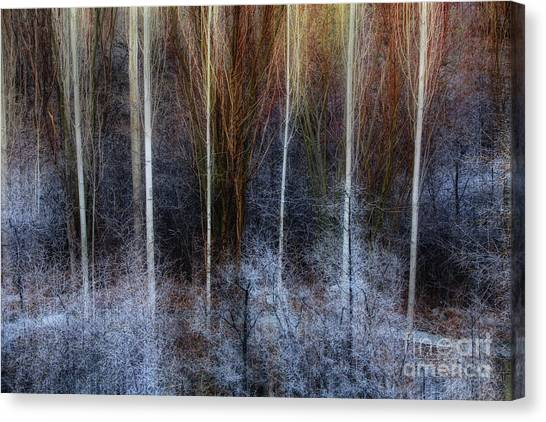Veins Of Forest Canvas Print