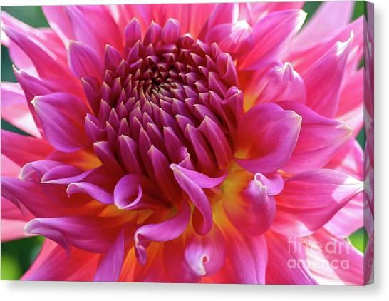 Vibrant Dahlia Canvas Print