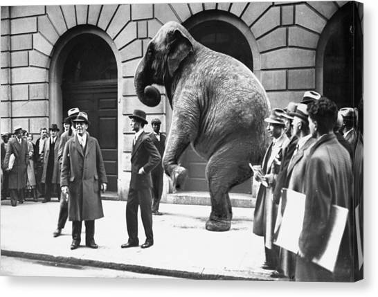 Victory, The G.o.p. Elephant, Stands In Canvas Print