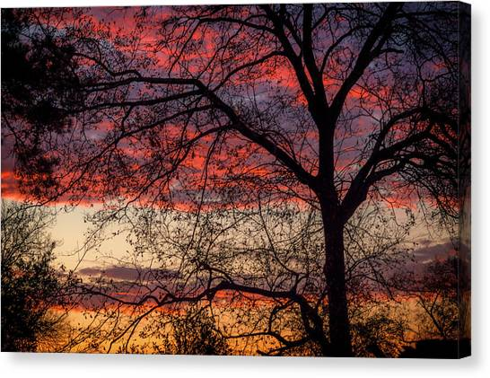 View From The Back Door #1 Canvas Print
