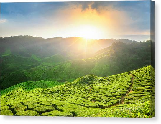 Farmland Canvas Print - Viewpoint On The Top Of Cameron by Anek.soowannaphoom