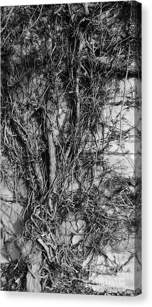 Canvas Print featuring the photograph Vine Highway by Jeni Gray