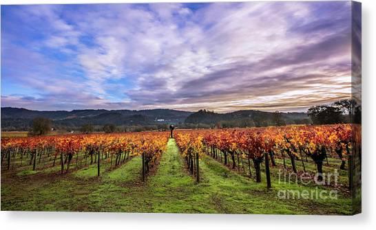 Sonoma Valley Canvas Print - Vineyard Beauty by Jon Neidert