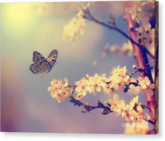 Horizontal Canvas Print - Vintage Butterfly And Cherry Tree by Dark Moon Pictures