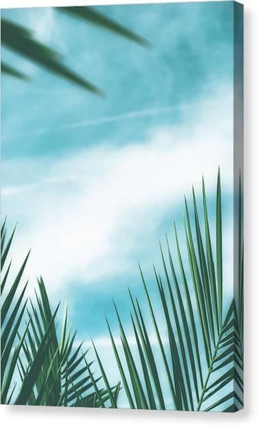 Vintage Palms II Canvas Print