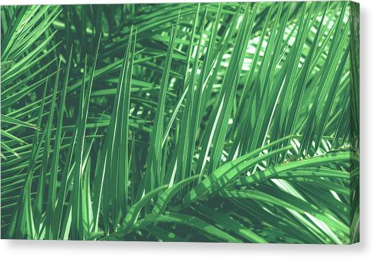 Vintage Palms V Canvas Print