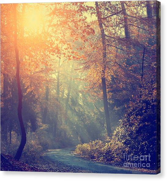 Vintage Photo Of Autumn Forest Canvas Print by Dark Moon Pictures