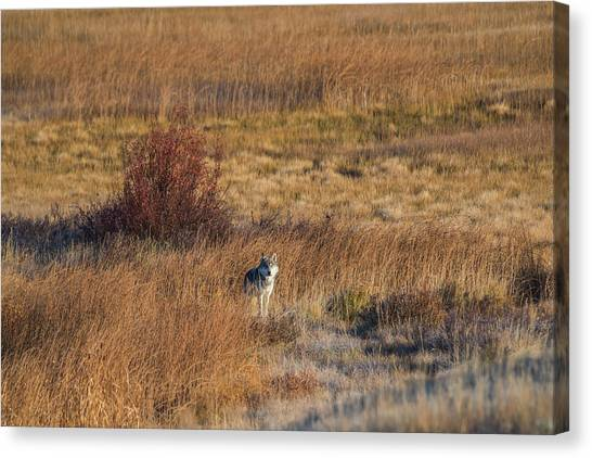 Canvas Print featuring the photograph W2 by Joshua Able's Wildlife